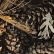 Pine Cones — Stock Photo #4580525