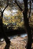 Brillante día de otoño — Foto de Stock