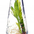 Plants in bottle — Stock Photo