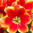 Close-up of bundled red tulips — Stock Photo