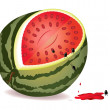 Stock Vector: Seeds escape from water-melon