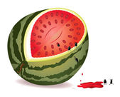 Seeds escape from water-melon — Stock Vector