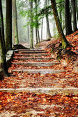 Leaf covered steps — Stock Photo