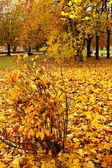 Podzimní městský park — Stock fotografie