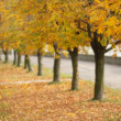 Mellow autumn — Stock Photo