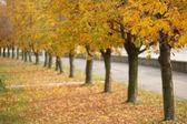 Mellow autumn — Stock Photo