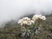 Kilimanjaro view — Stock Photo