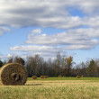 Rolls of hay in a field - Stock Photo