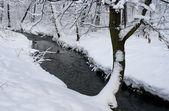 The snowy tree — Stock Photo