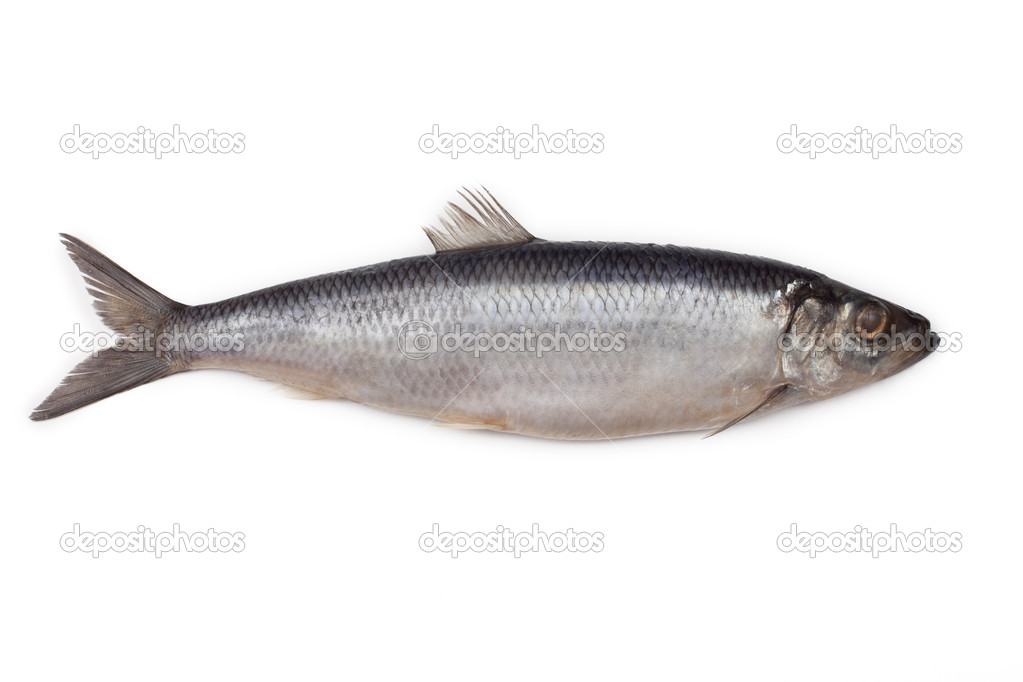 Salted herring fish isolated on white background — Stock Photo #5307106
