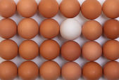 Eggs stand in a row — Stock Photo