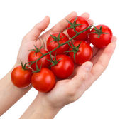 Tomatoes cherry on a green branch in female hands isolated — Stock Photo