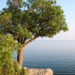 A single tree on the sea shore — Stock Photo #4700780