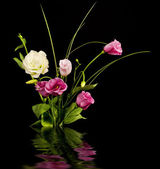 Pink and white eustoma flowers — Stock Photo