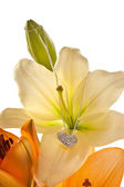 Lily with chain and diamond heart — Stock Photo