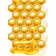 Bee honeycombs - 图库照片