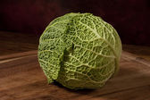 Cabbage closeup — Stock Photo