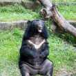Fat Bear - Stockfoto