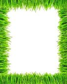Grass Frame — Stockfoto