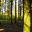 Sunny Forest - Photo