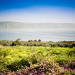 The Sea of Galilee - Stockfoto