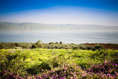 The Sea of Galilee — Stock Photo
