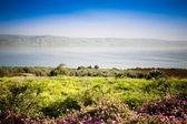 The Sea of Galilee — Stock Photo
