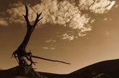 Wüstenskulptur — Stock Photo