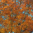 Herbstfarben - Stock Photo