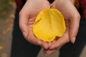 Yellow leaves in the hands of — 图库照片