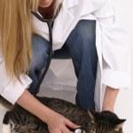 yrkesutbildning och tabby katt — Stockfoto