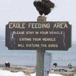 Alaskan Bald Eagle — Stock Photo #4932678
