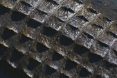 American Alligator skin texture — Stock Photo