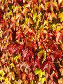 Carpet of leaves — Stock Photo