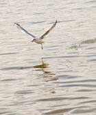 Seagull fly on the sea — Stock fotografie