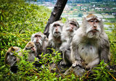 Monkey family — Stock Photo