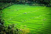 Green lines — Stock Photo