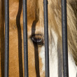 Horse in captivity — Stock Photo