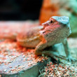 Stock Photo: Green lizard