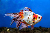 Colorful fish — Stockfoto
