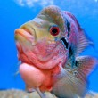 Colorful fish - Stock Photo