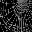 Frozen spider web isolated on black - Stock Photo