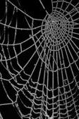 Bevroren spinnenweb geïsoleerd op zwart — Stockfoto