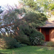 Fallen tree on house — Stock Photo #4623188