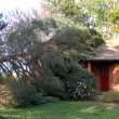 Fallen tree on house — Stock Photo
