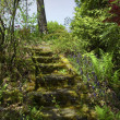 Stone steps in garden — Foto Stock #4623478