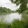 Stock Photo: River with grass and trees under overcast sky
