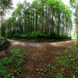 Royalty-Free Stock Photo: 360 Panorama of forest