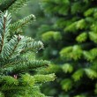 Christmas tree farm — Stock Photo #4626070