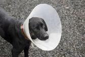 Cane ferito — Foto Stock